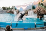 Image for ticket SeaWorld and Aquatica 2 Parks 14 Days