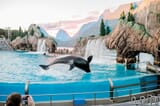 Image for ticket SeaWorld Orlando 1 Park 1 Day+